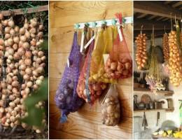 Подкормка и уход за луком в дождливое лето