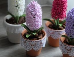 Выращивание и уход за гиацинтами в домашних условиях