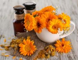 Применение календулы: польза и противопоказания для здоровья