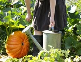 Чем удобрять тыкву в открытом грунте для хорошего роста и плодоношения