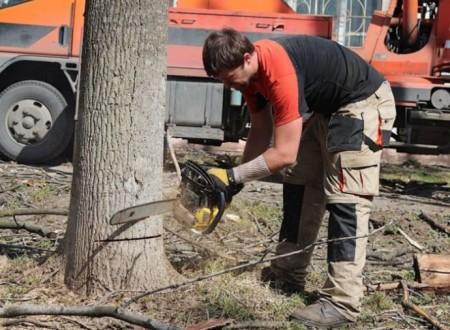 Спил деревьев на участке: законодательное разъяснение и штрафы