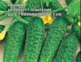 Лучшие самоопыляемые сорта огурцов для теплицы и открытого грунта